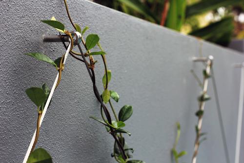 garden-trellis-wire.png